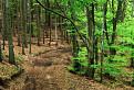 V bukovom lese