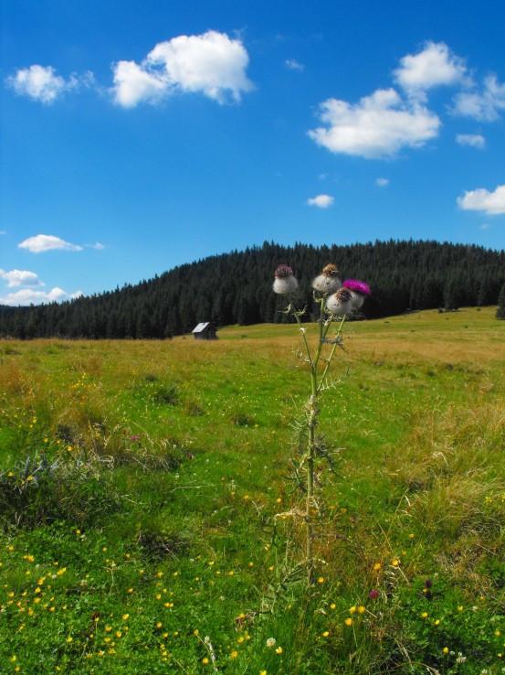 Hôľne pastviny