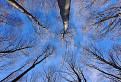 Poézia bukového lesa
