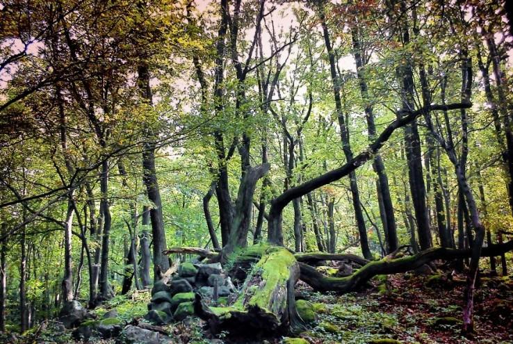 V čarovnom lese...