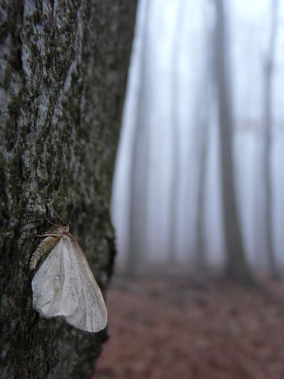 Na strome