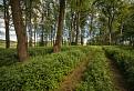 Zarastená lesná cesta