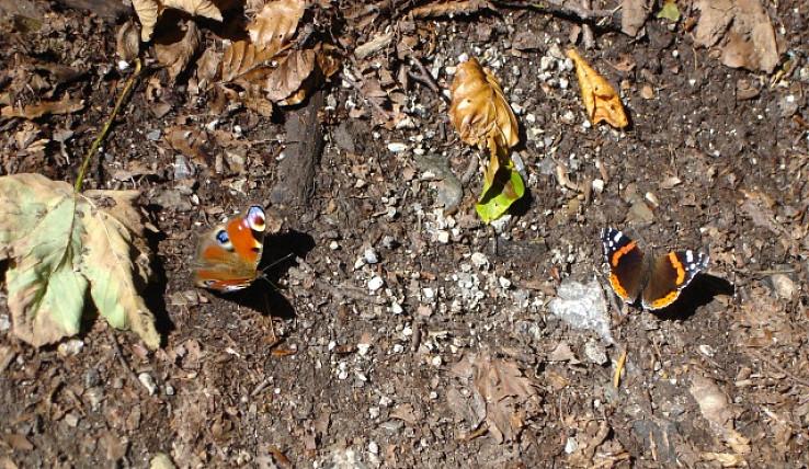 Motýlia show