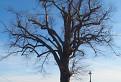 Strom s krížom / 1.0769