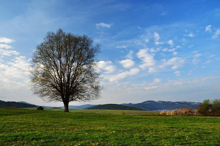 Osamelý strom