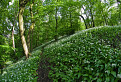 cesnakovy les II.