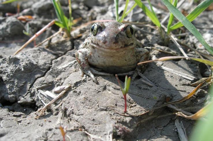 usmievavá žabka