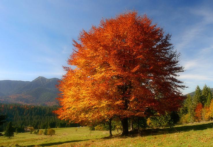 Ďalší jesenný strom