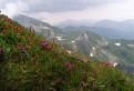 Kvety Tatier