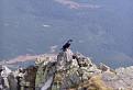 Turista s krídlami