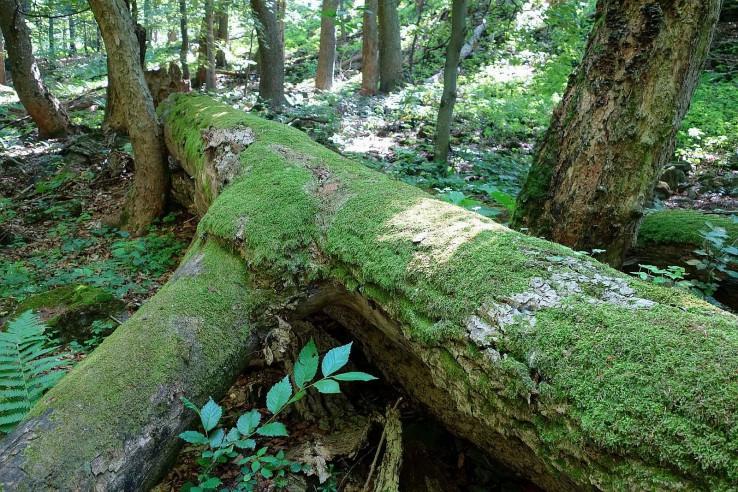 V suchom pralese