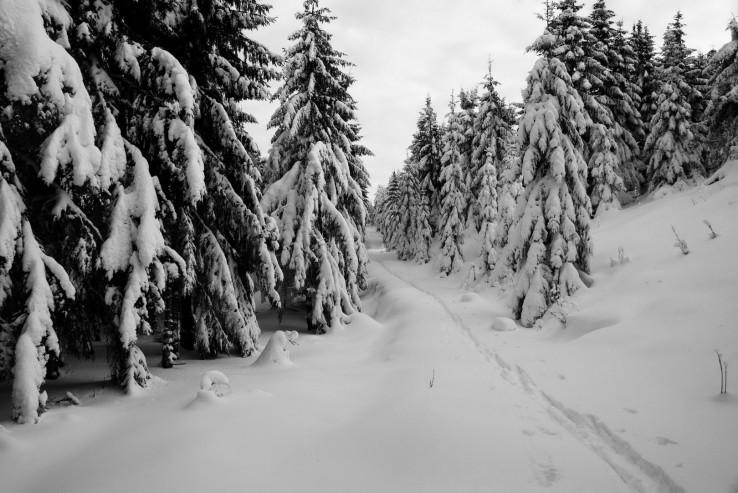 Zima pod kojsovkou