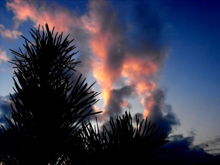 Dymiaci stromček