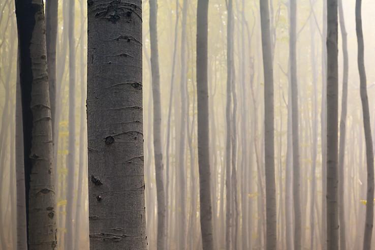 Les pod Vysokou