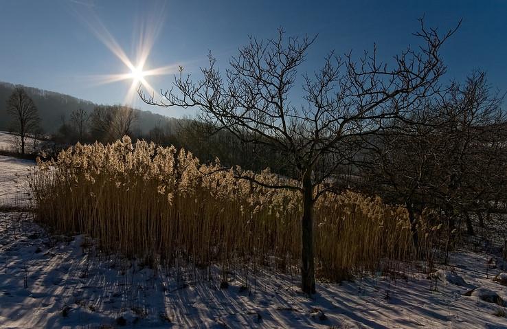 Zimné trávy