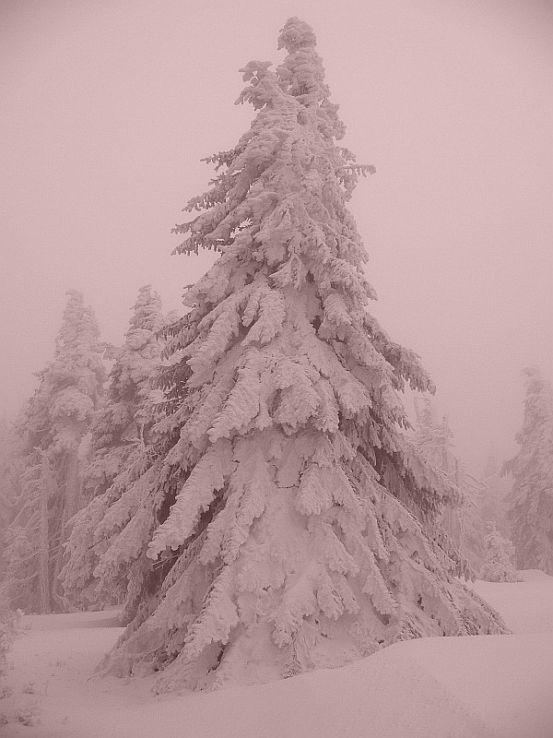 Snehulienka