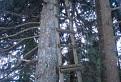 Popoluškin rebrík