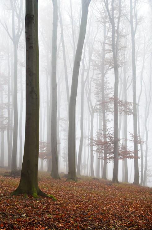 Tajomný les v Karpatoch IV.