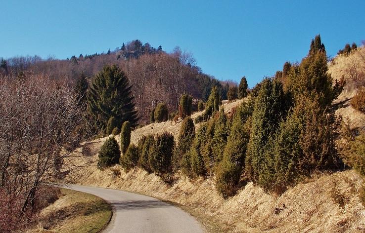 Pomedzi holé stromy