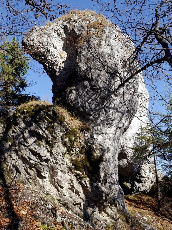Skamenelý Maxipes Fík