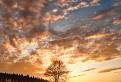 Západ slnka na troch stromoch