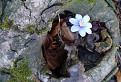 Prírodný kvetináč