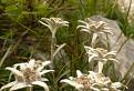 V tráve, pod smrekom, na Suchom / bez hodnotenia