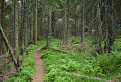 Lesom fabovohoľským