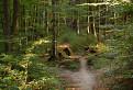 Ako v divočine