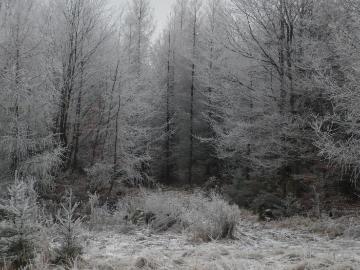 Obalené mrazom