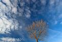 Strom života / 1.0000