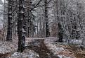 Les pod Strážovom / 1.1667