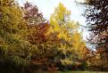Jeseň vo farbách