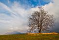 Sološnícky strom / 1.0000