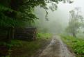 Daždivé