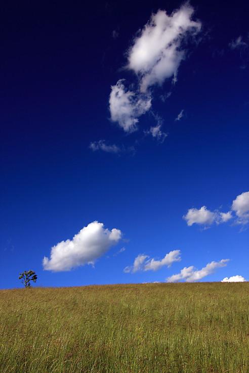 Tráva, stromček a obláčiky