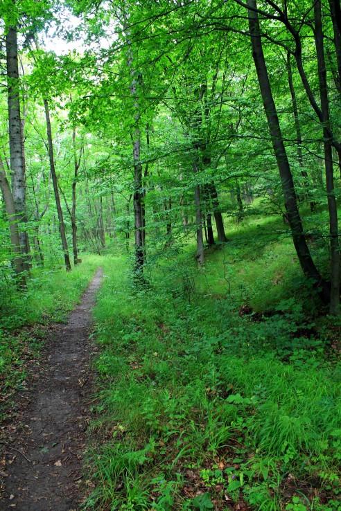 Vstup do lesa