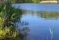 Peterský rybník.