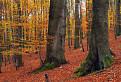 V jesennom malokarpatskom lese
