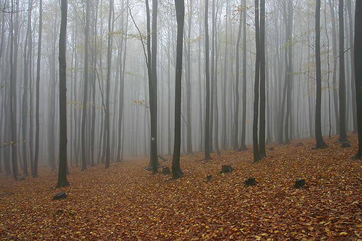 Jeseň pod Vysokou