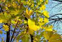 Zlatá jeseň