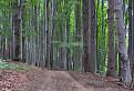 Iba obyčajný les.