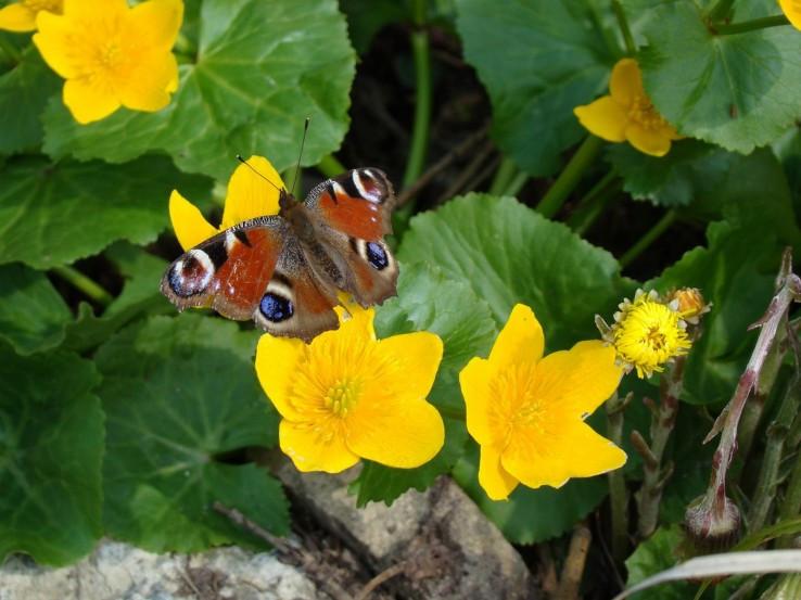 Jar v Turzovskej vrchovine