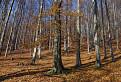 Jesenné Malé Karpaty