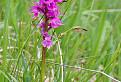 Orchidea pre Soňu  / bez hodnotenia