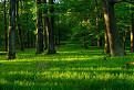 dobré ránko les !
