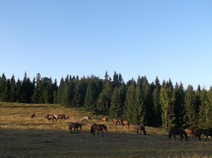 Dobré ráno z Muránskej planiny :)