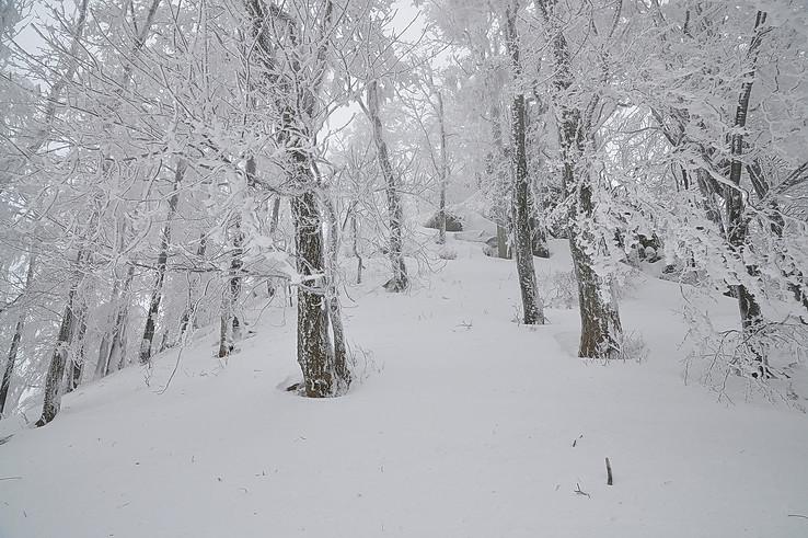 V kraji snehovom I.
