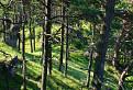 Prales Ostrej Malenice