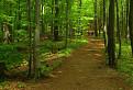 Lesný pohľad...